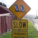 Oamaru. Samo znak, pingvinov nikjer. Bojda se futrajo do mraka...