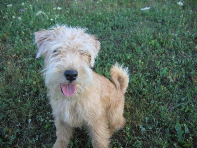 Alf poletje 2006 - foto