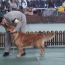 CACIB ZAGRB 3.03.2007.