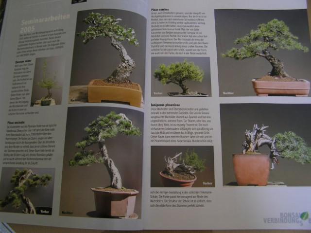 Slike iz revije - foto