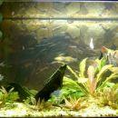 Moj akvarij (250l)