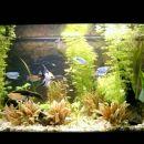Glavna slika akvarija
