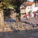 Golobčki v najstarejšem in po mnenju mnogih najlepšem delu Sarajeva so že pokonci. (okt.05