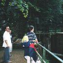 Blejski vintgar 1990