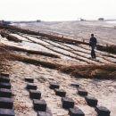 Texel 1995