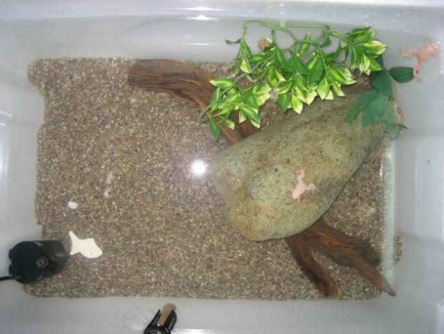 90l akvarij z grelcem, filtrom, lučjo ter vodnimi žabicami...