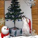 Višek poziranja... čaka božička