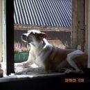 Takole se pa sončim na oknu.