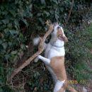 Nora na drevesa.
