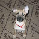To pa je Kaja. Meyin podmladek. Tu je bila stara 4 mesece.