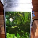 Star akvarij