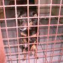 Zelo majhna in nežna psička KP azil 041 626 448