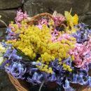 pomladne rožce