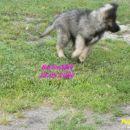 Volim ja da trcim samo kad moram