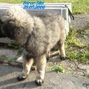 Bicu ja veliki pas