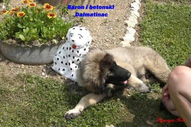 Baron-Silni-Cetiri mjeseca - foto povečava