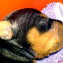 Ester glava  -  13.02.2007.