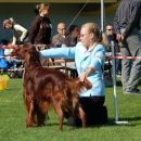 Loving Red Irish Setters