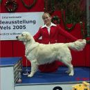 IHA Wels 2005: Junior Handling 3rd place