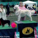 Cac Trbovlje 2005: Junior Handling 1st place