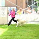Cac Sacile 2006: Gaiting to Best of Breed