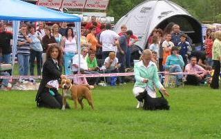 Cac Hrusica 2006: Liza came between 3 best junior Terriers