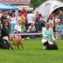 Cac Hrusica 2006: Liza came between 3 best junior Terriers