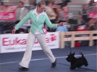 Cacib Vrtojba 2006: Liza running