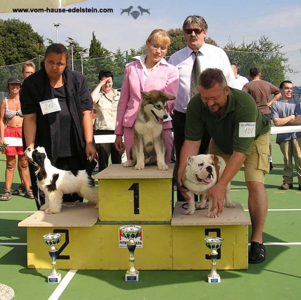 Cac Rovinj 2005: Winning BIS Puppy at his first show!