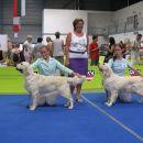 IHA Oberwart 2006: Amy won CAC, CACIB