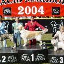 Cacib Maribor 2004: Westie-3rd place