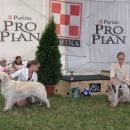 Cacib Szombathely 2006: My 'swich-dog'