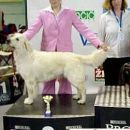 Cacib Vrtojba 2005: 2nd place with Golden Retriever Salome