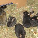 mali zajčki