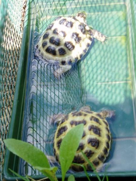 Želve - foto