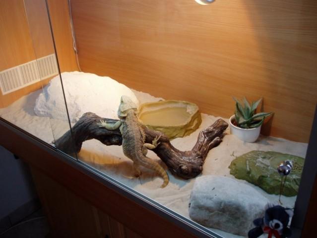 My home animals - foto