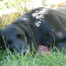 resting (Pia)
