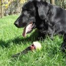 Rona with her ball!