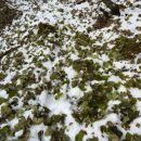 Preproga na snegu