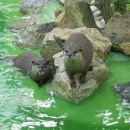 Živalski vrt Zagreb - april 2006