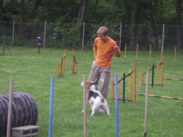 Toby in druščina na zaključni agility tekmi - foto
