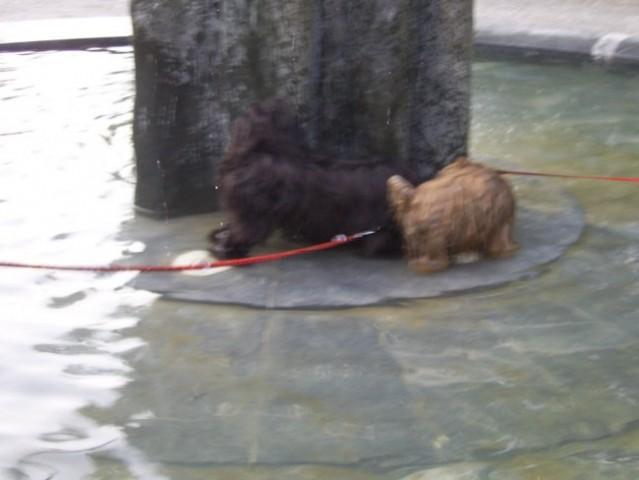 V parku in pri treh ribnikih - foto