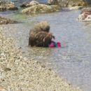 toby na morju 2006