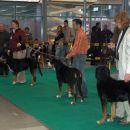švicarski planšarski pes