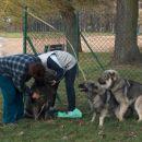 Branka in Katja češeta Lema medtem ko Kato naskakuje Dono :)))