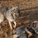 Kato in Dona na tleh
