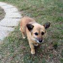 Floka, približno 2 leti stara psička išče dom!