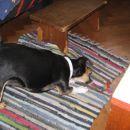 le kaj ji je naredil tale tepih:)