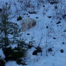 iščem svizce..... 1.1.2008
