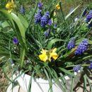 Pomladna skleda malo kasneje.